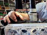 Ученым из США удалось вырастить из стволовых клеток полноценную почку