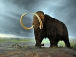 В Якутии ученые начнут клонировать мамонтов