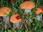 Валерий Филимонов: Клондайк закрывается или чьи в бору грибы и ягоды?