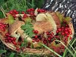 Власти готовят новый сбор – за сбор грибов. На очереди налог на воздух…