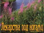 """Беседа с потомственным алтайским травником Е.А.Головачем """"Лекарства под ногами…"""" Часть 1 (видео)"""