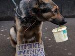 В Госдуме предложили штрафовать за попрошайничество с животными