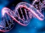 Ученые выяснили, почему зарядка продлевает жизнь